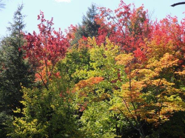 photo photo de paysage d'automne au canada