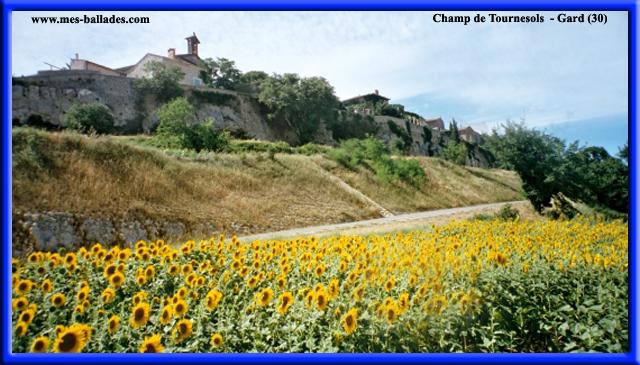 photo image paysage latex