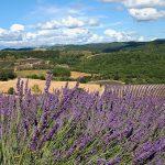 Image paysage provence