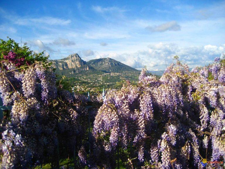photo image paysage provence