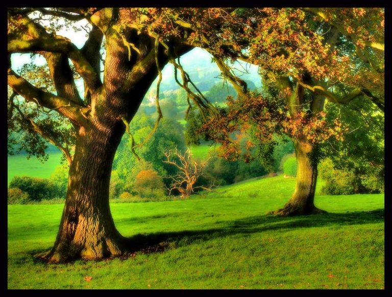 photo paysage joyeux