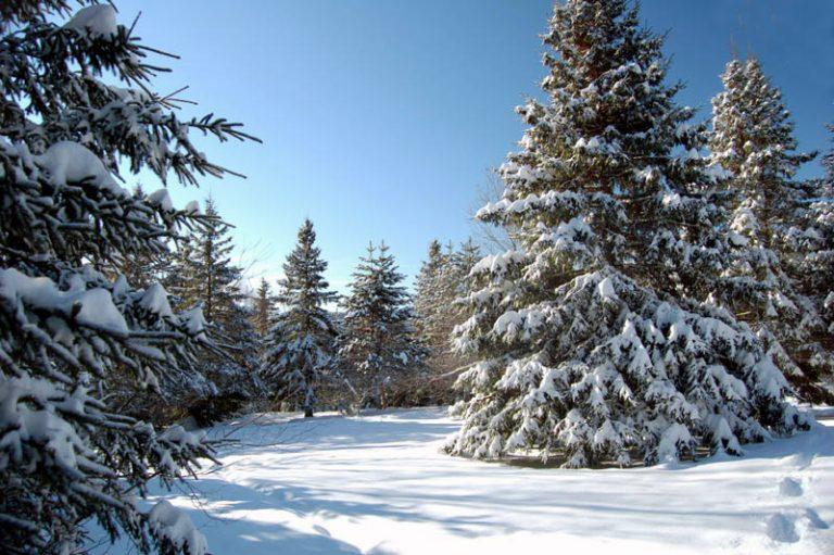 photo photo de paysage d'hiver