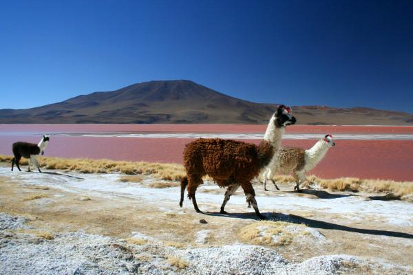 photo photo paysage chili