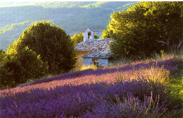 photo photo paysage provence