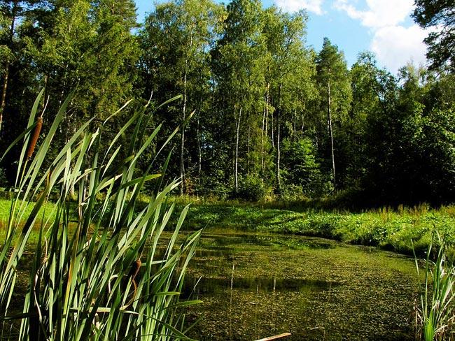 photo photo de paysage d'été