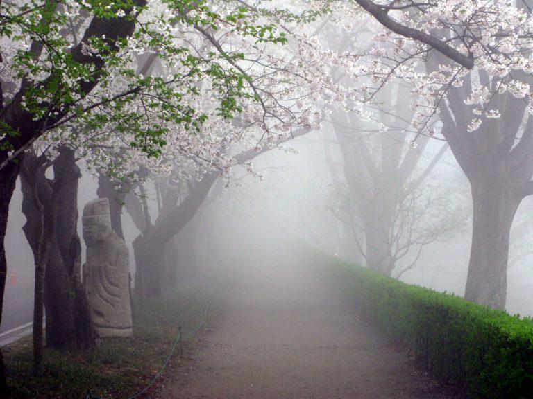 photo image paysage brouillard