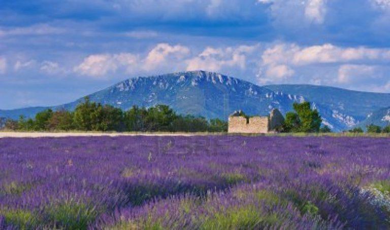 photo image paysage lavande