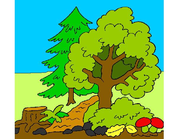 photo paysage à colorier