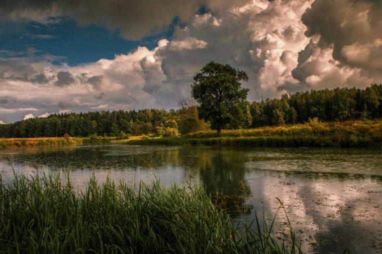 photo photo paysage landais