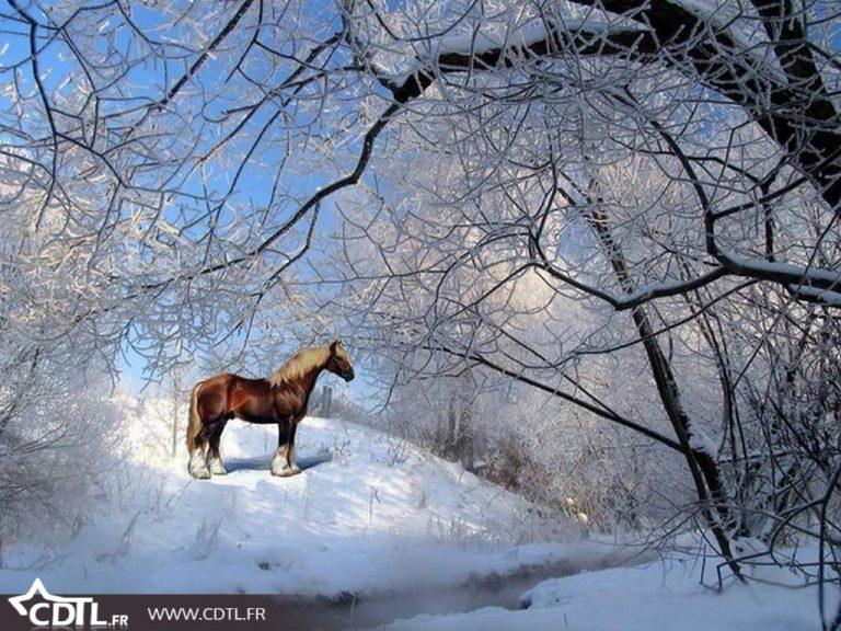photo photo paysage neige