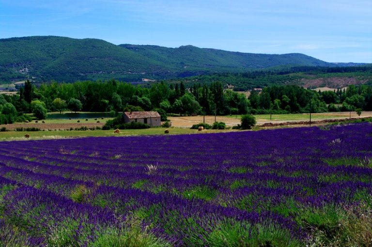 photo paysage provence
