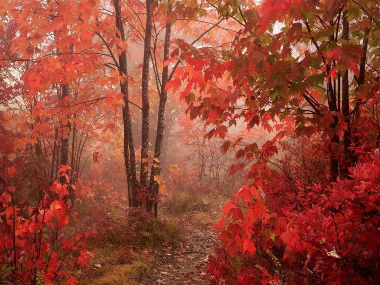 photo paysage rouge