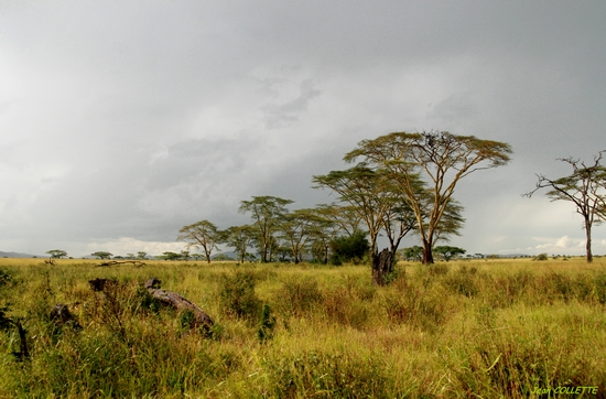 photo paysage savane