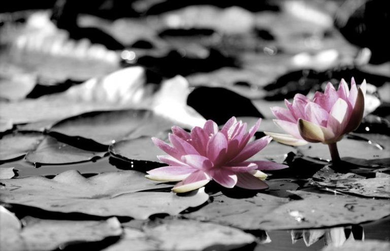 photo paysage zen noir et blanc