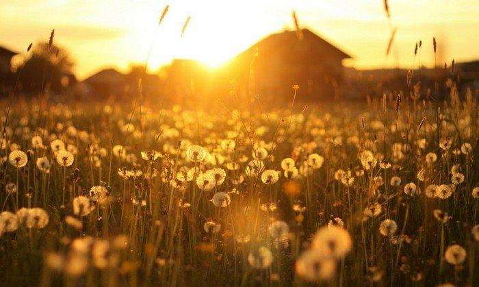 photo photo paysage fleuri
