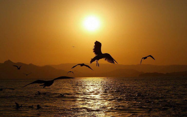 photo photo paysage oiseaux