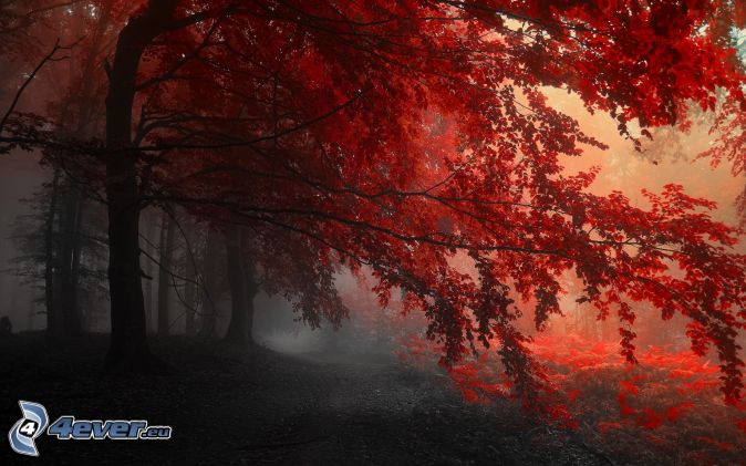 photo paysage rouge