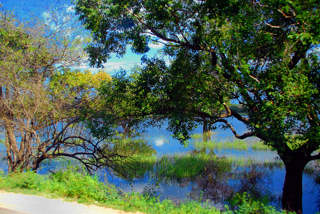 photo photo paysage sri lanka
