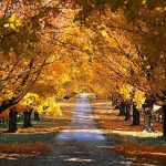 Image paysage automne