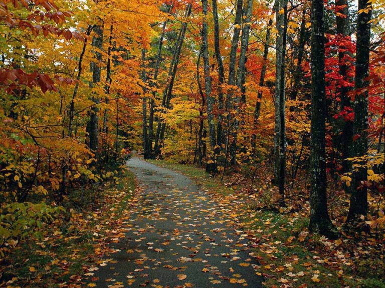 photo image paysage automne
