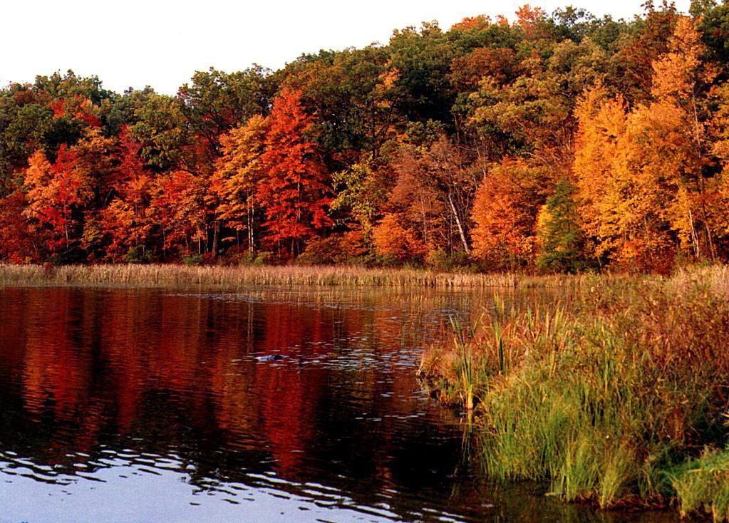 foto de image paysage automne