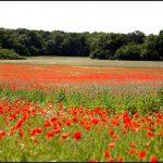 Image paysage fleuri