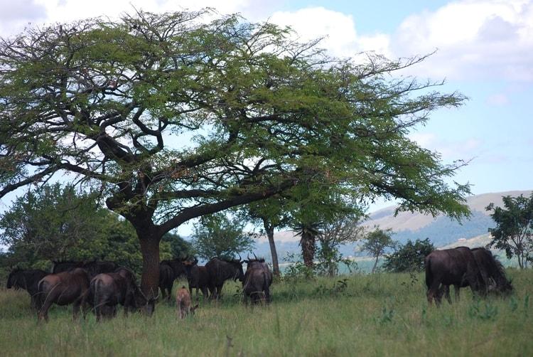 photo photo paysage afrique