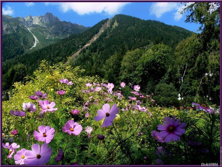 photo photos paysage montagne été