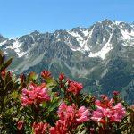 Photos paysage montagne été