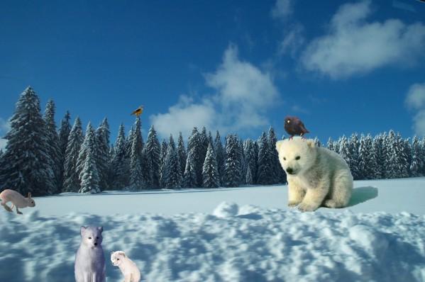 photo image paysage avec animaux