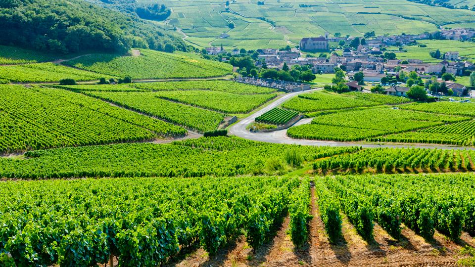 paysage-bourgogne