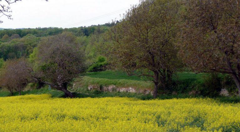 photo paysage bucolique
