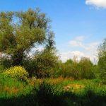 paysage campagne