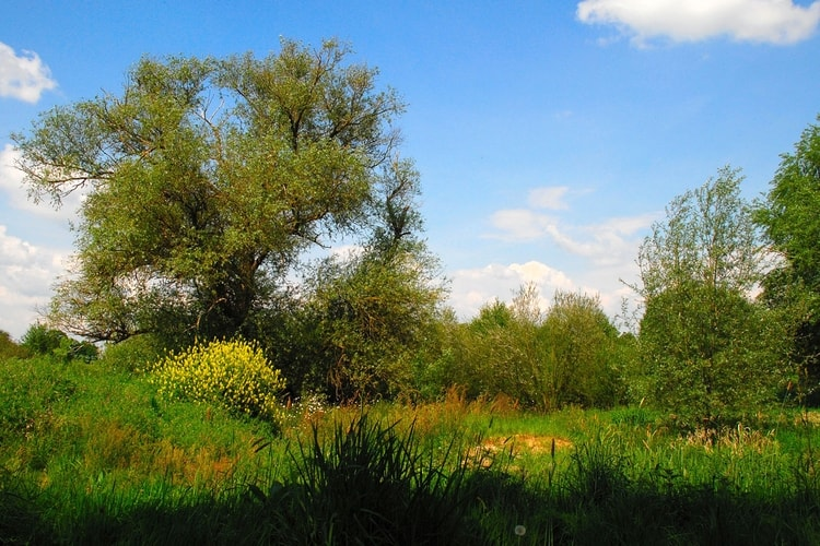 photo paysage de campagne