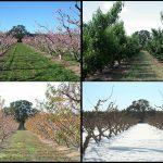 paysage quatre saisons