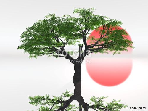 photo photo paysage zen