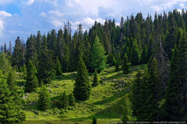 photo photo paysage foret