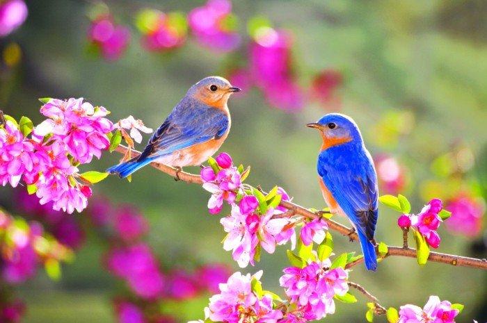 photo image paysage magnifique
