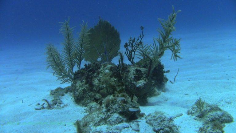 photo paysage sous marin