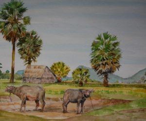 Image paysage cambodge