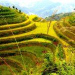 paysage asiatique