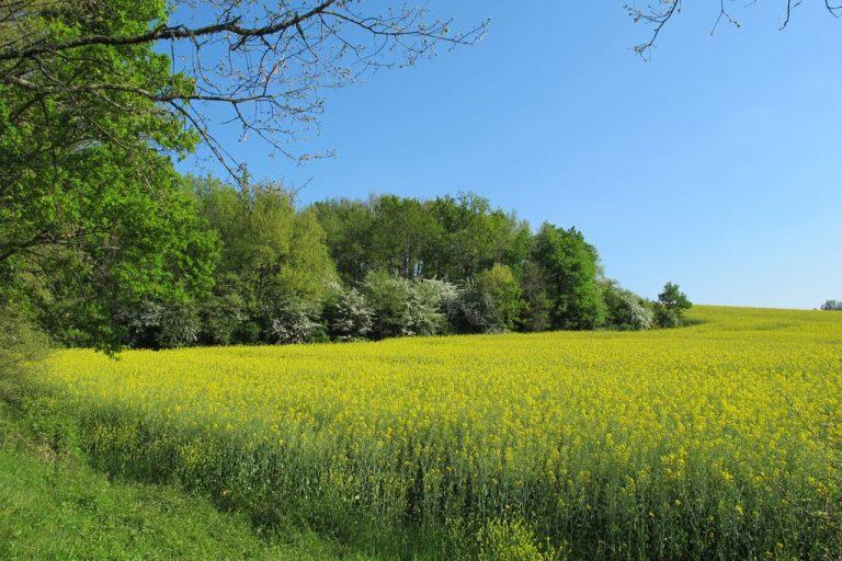 photo photo paysage de campagne
