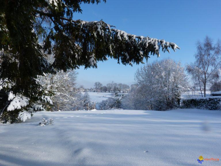 photo photo paysage hiver