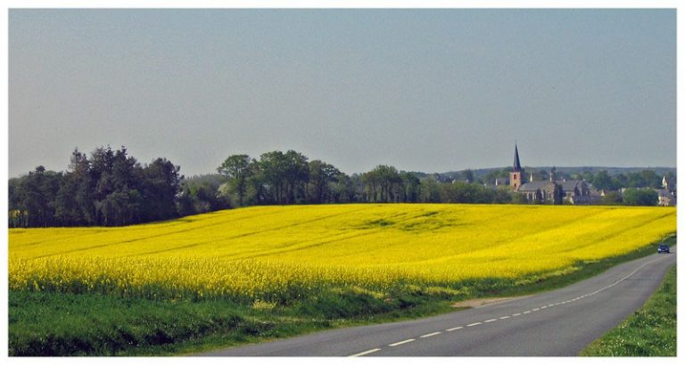 photo paysage jaune