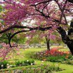 Paysage printemps