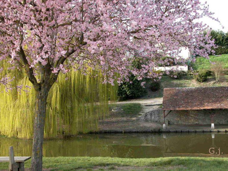 photo paysage printemps