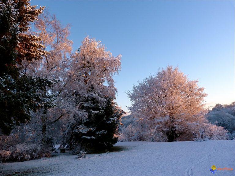 photo photo paysage sous la neige