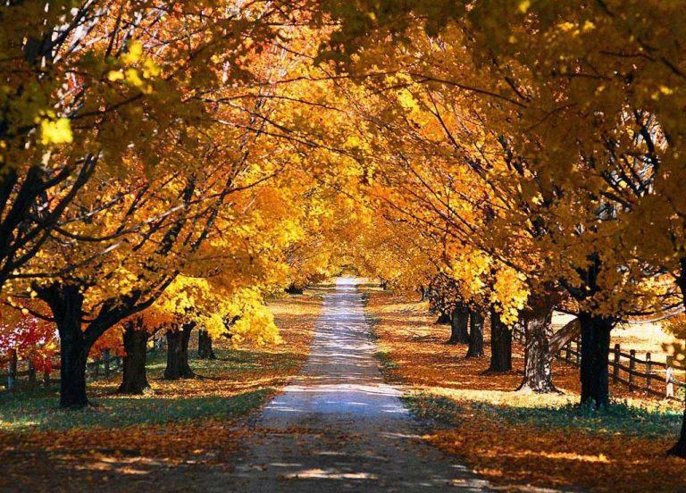 photo photo de paysage d'automne