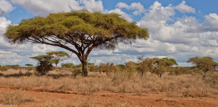 photo photos paysages kenya