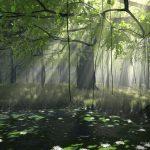 Image paysage foret